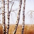 Stock Photo: Forest birch