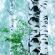 Forest birch — Stock Photo #26177347