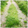 Stock Photo: Grass and daisies growing on trail