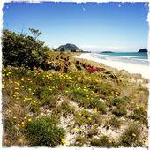 цветы покрытие песчаные дюны на пляже — Стоковое фото