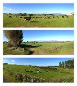 Nova zelândia — Fotografia Stock