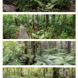 Rain forests — Stock Photo