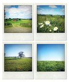 Rural scenes — Stock Photo