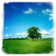 Lone tree in field — ストック写真