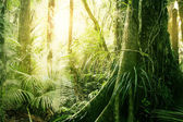 тропические джунгли — Стоковое фото