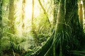 熱帯のジャングル — ストック写真