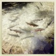 Stock Photo: Rainbow trout