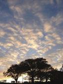 Morning sky — Stock Photo
