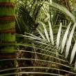 Stock Photo: Tropical jungle