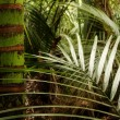 Stock Photo: Tropical forest