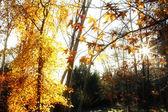 Skogen solljus — Stockfoto