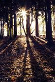 Forest sunlight — Zdjęcie stockowe