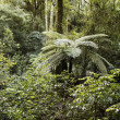 Tropical forest — Photo