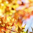 Autumn — Stock Photo #30622255