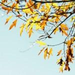 Autumn — Stock Photo #30622293