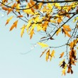 Autumn — Stock Photo #30622293
