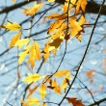 Autumn — Stock Photo #30622305
