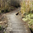 Wetland walk — Stock Photo