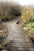 Wetland walk — Stock Photo