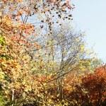 Autumn — Stock Photo #33470459