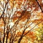 Autumn — Stock Photo #33470553