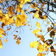 Autumn — Stock Photo #33470669