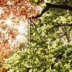 Autumn — Stock Photo #33470671