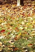 Autumn — ストック写真