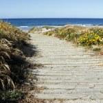 Beach trail — Stock Photo