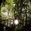 Stock Photo: Forest sun