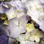 Petals — Stock Photo #38362763