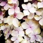 Petals — Stock Photo