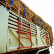 Truck Sugarcane — Stock Photo