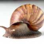 velho macro de caracol — Foto Stock