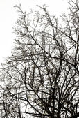 Abstract Silhouette Branches — Stock Photo