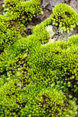 Moss Bark Tree — Stock Photo