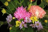 Dianthus bloem — Stockfoto