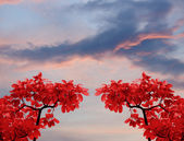 Cielos de hojas — Foto de Stock