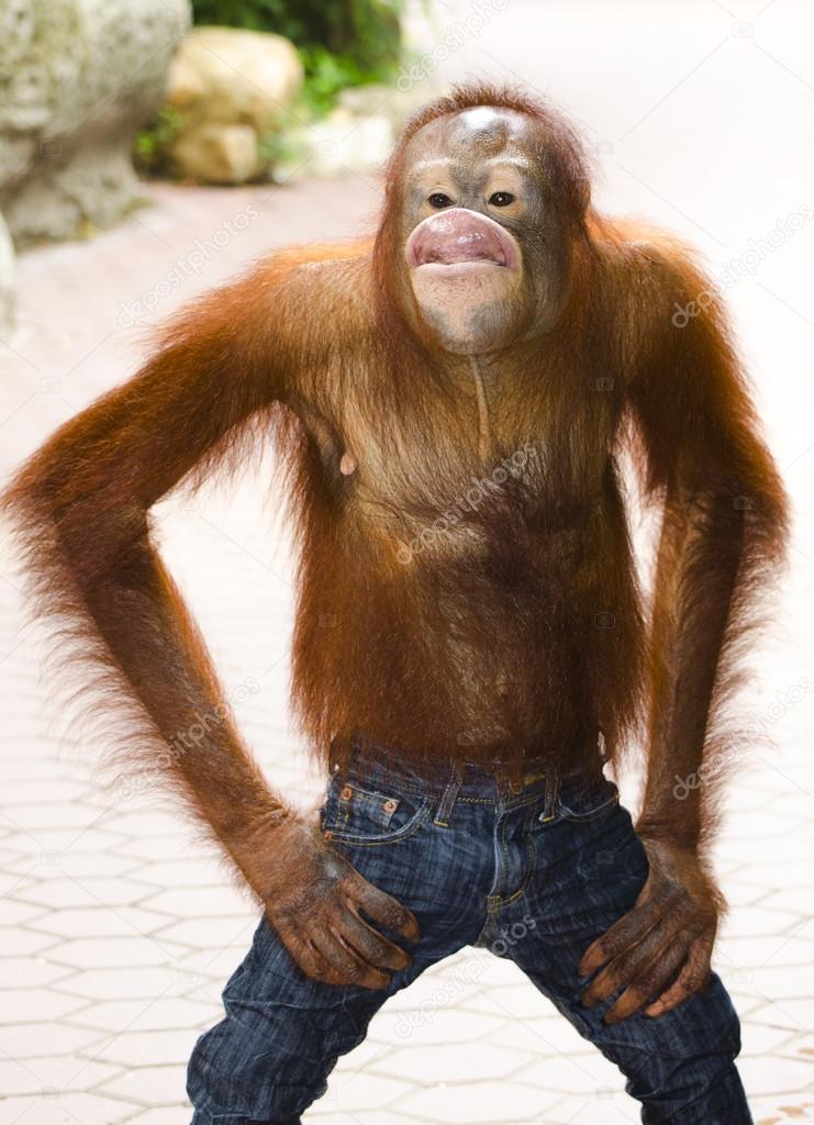 Blagues roux : Chimpanz? blague photographie koratmember ?