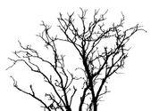 Silhouette Dead Wood — Stock Vector