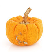 Isolated Fancy Pumpkin — Stock Photo