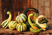 Fancy Pumpkin Art — Stock Photo