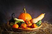 Raw Fancy Pumpkin — Stock Photo