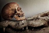 Skeleton with crocodile skulls — 图库照片