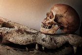 Skeleton with crocodile skulls — Stock Photo