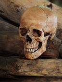 Skull Wood Planks — Stock Photo