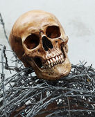 Barbed Wire Skeleton — Stock Photo
