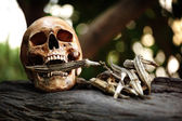 Skeleton with agriculture product — Stock Photo