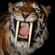 Saber-toothed tiger face — Stock Photo #13495024