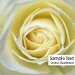 Royalty-Free Stock Vector Image: Macro image of yellow rose